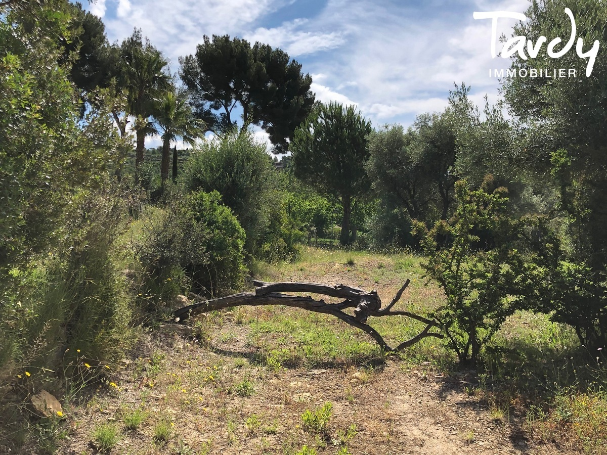 Propriété familiale, possibilité 2 villas - Les Lauves 83740 La Cadière d'Azur - La Cadière-d'Azur - NOUVEAUTE TARDY IMMOBILIER