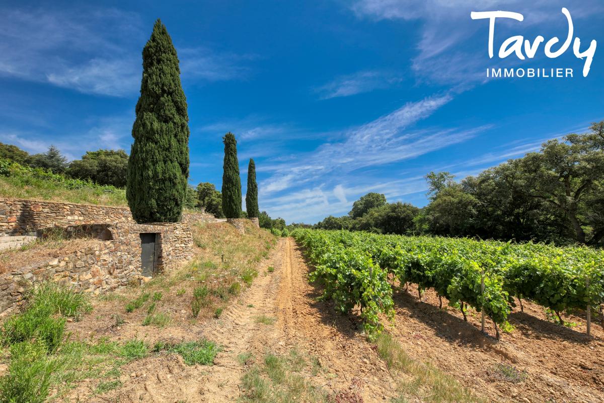 Bâtisse historique  du 16ème  sur 6 hectares- 83310 GRIMAUD - Grimaud - domaine dans la campagne vigne