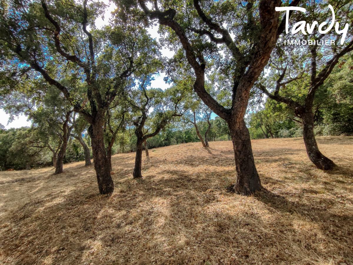 Villa avec piscine et grand terrain - 83310 - GRIMAUD - Grimaud - Grundstück mit Olivenbäumen und Villa zu verkaufen